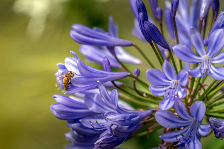 Honey Bee Album
