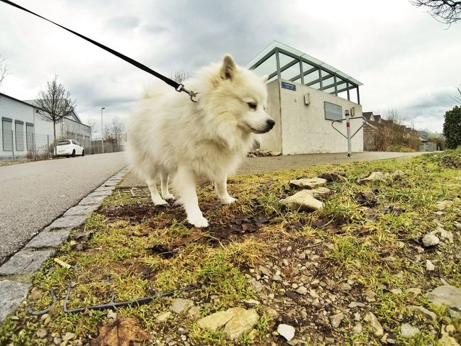 Here my Dog Cooky! Gopro Gopro Shots