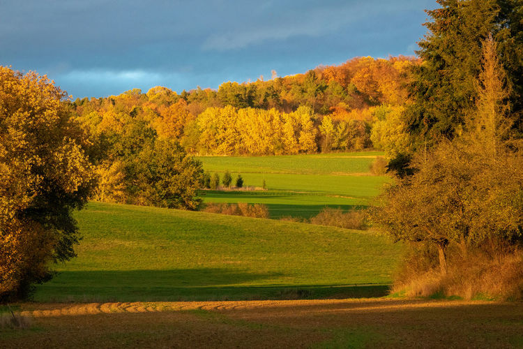 Scenic view of trees on field against sky during autumn
