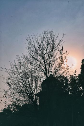 Bird Flock Of Birds Silhouette No People Flying Outdoors Sky