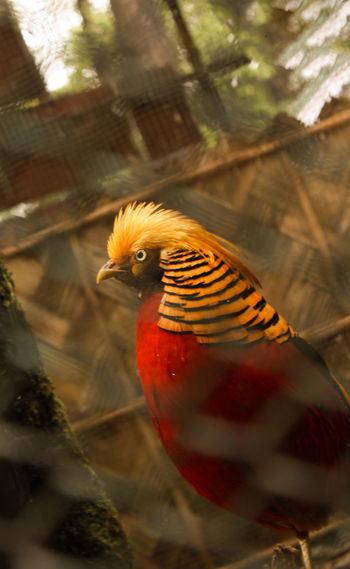 Animal Themes Beauty In Nature Bird Bird Photography Close-up Day Domestic Animals Nature Nature New On Eyeem No People One Animal Outdoors Perching Red Bird EyeEmNewHere