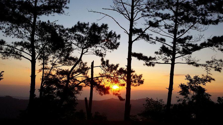 Tree Sunset Sun