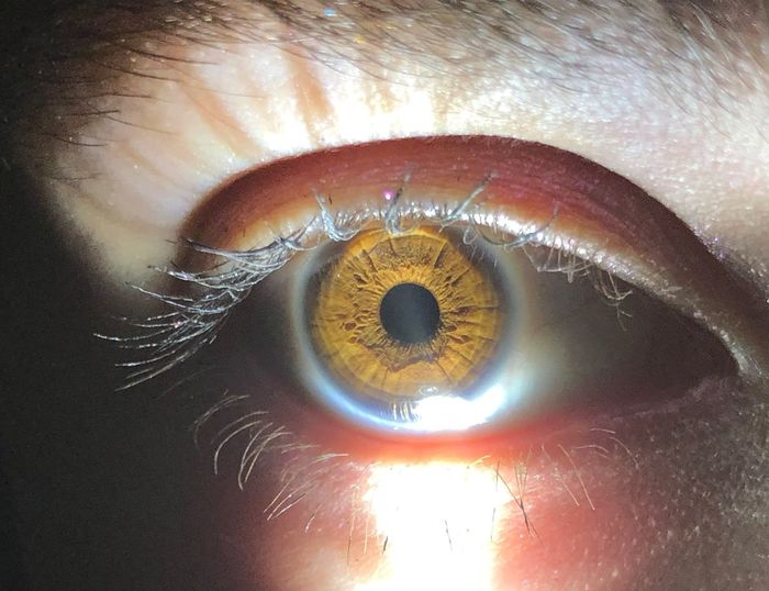 Eyesight Human