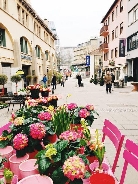 Happy Weekend !!! Stuttgart Flower Flower Market Cityscape Good Morning Eyeem0711