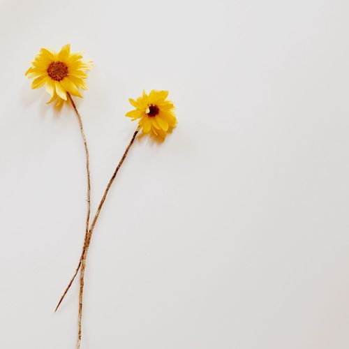 two yellow