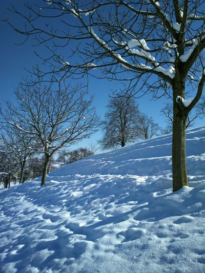 Cold Cold Temperature Frozen It's Cold Outside Landscape Nature Snow Snow Covered Snowcapped Sun Sunshine Trees White Winter The Great Outdoors With Adobe