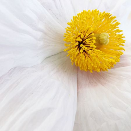 Garden Flower Flowering Plant Plant Freshness Yellow Beauty In Nature Fragility Petal Vulnerability  Flower Head Growth Nature Pollen Softness Outdoors Daisy White Color No People Close-up Inflorescence