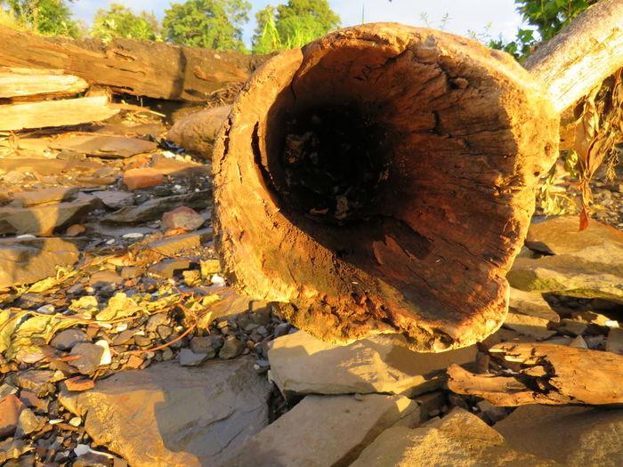 Close-up of damaged tree