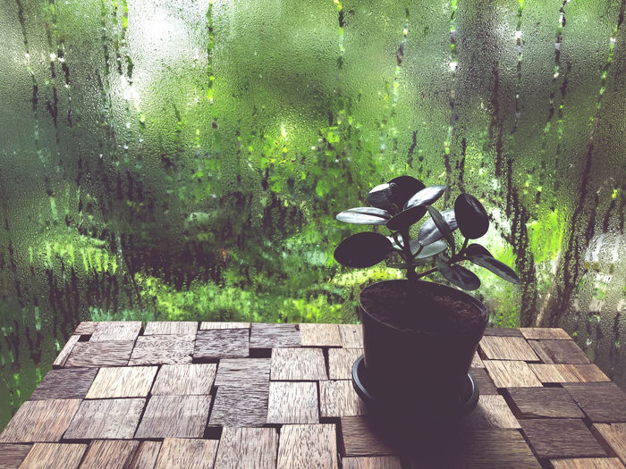 Potted plant on wooden floor by window