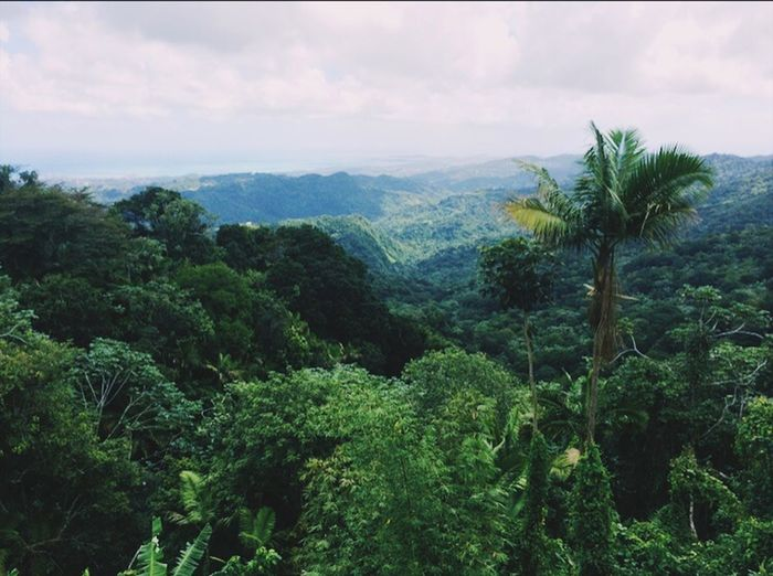 puertorico🌎 EyeEmNewHere Jungle Tree Nature Beauty In Nature Sky Growth Scenics Tranquility Green Lush Foliage Outdoors Plant Landscape Green Color