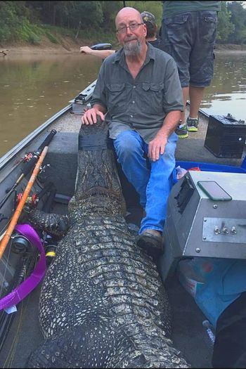 Alligator Hunting Alligator Head Wildlife Wild Animals Boating Mississippi  Full Length Outdoors Nautical Vessel Water People Southern Living Predator Predator Nature Reptile Dangerous Big Animals Large Animal River Monster Outdoor Photography Animals In The Wild One Person Senior Adult One Man Only 11'4,400 pounds. My friend got it.