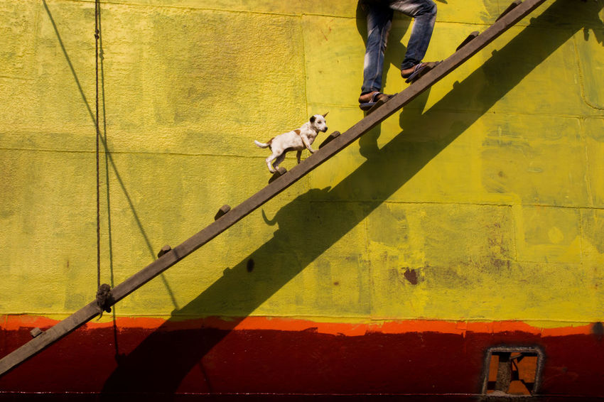 Untitled Day Domestic Animals Lifestyles Mammal Men Outdoors People Pets Shadow The Street Photographer - 2017 EyeEm Awards Walking Yellow