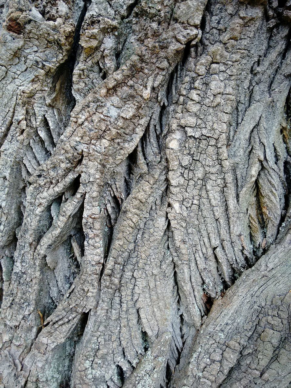 textured, rough, full frame, close-up, cracked, no people, nature, outdoors, day, bark, backgrounds, tree trunk, tree, pattern