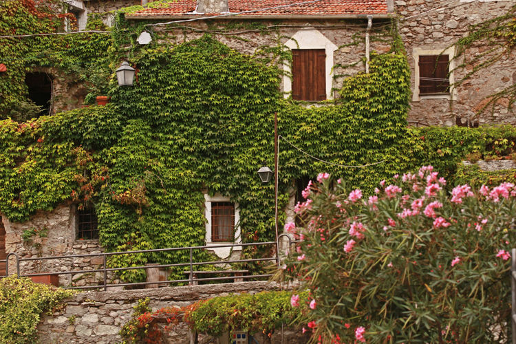 Liguria,Italy Village House Architecture Building Exterior Built Structure Climbing Plant Day Flower House Nature No People Outdoors Plant Residential Building Stone Architecture Stones Town Village Village Life Village Photography Village View Villagelife Windows