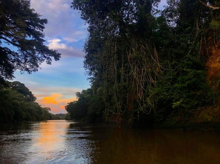Río la miel VSCO Goprophotography Colombia Goprooftheday Gopro Gopro Tree Plant Sky Water Nature Tranquility Growth No People Beauty In Nature Reflection Scenics - Nature Waterfront Sunset Non-urban Scene Orange Color Tranquil Scene Going Remote