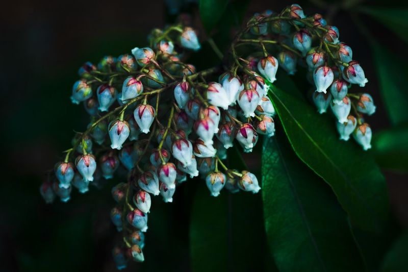 Close-Up Of Flower Buds Growing Outdoors At Night