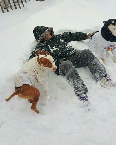 Taking Photos Photos By Jeanette Home Is Where The Art Is Snow Day Snow Chilling My Son My Dogs Are Cooler Than Your Kids My Dog My Photography Pitbull Husky Hanging Out Enjoying Life Relaxing Keeping Warm Tshirts Wintertime Winter Winter Day Comfortable