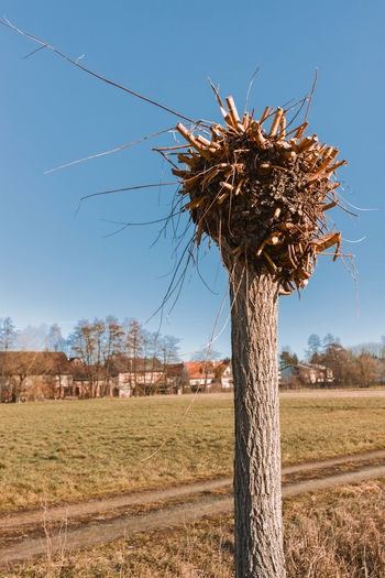 Dead tree on field against clear sky