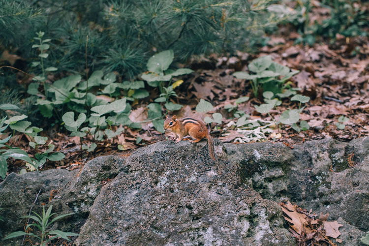 High angle view of squirrel on land in forest