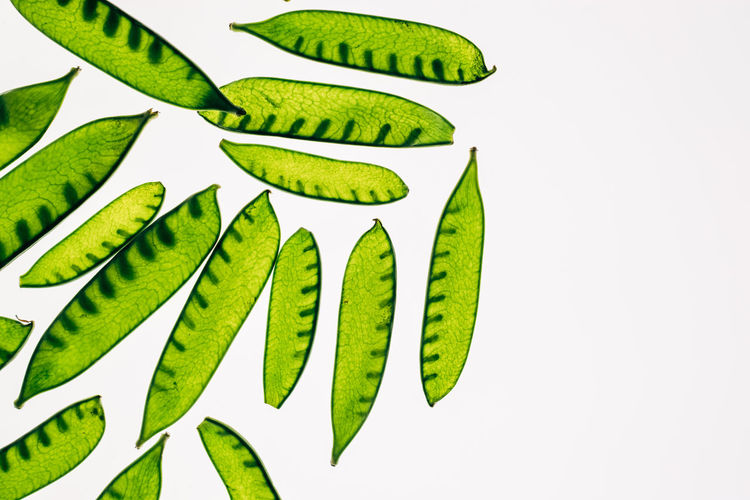 High angle view of green leaves against white background