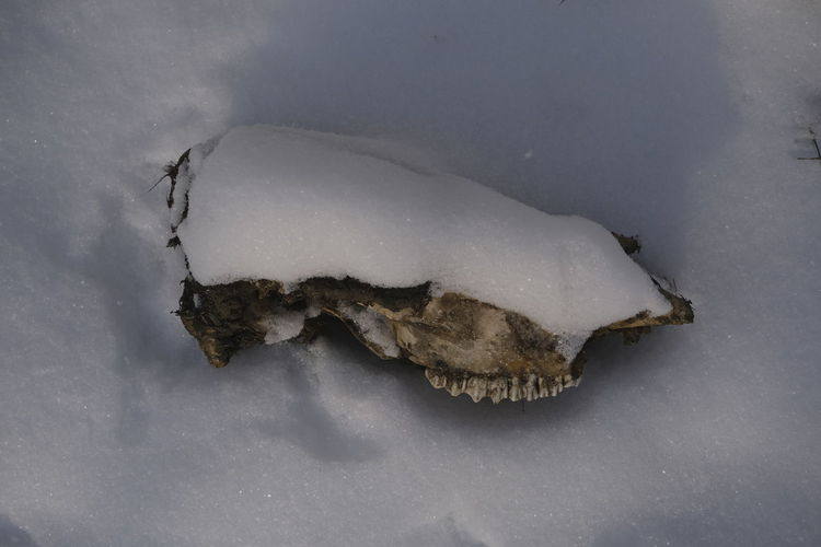 High angle view of a reptile on snow