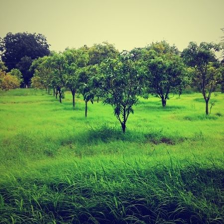 Iith Nature Beauty Green Awesome Life Peace