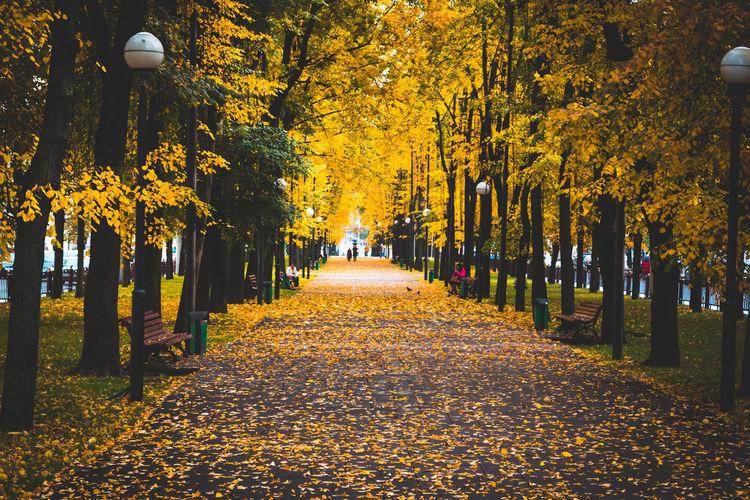 Autumn Belarus Day Kirov Nature Outdoors Park Park - Man Made Space Season  Street Light Tree Treelined Vitebsk Walkway