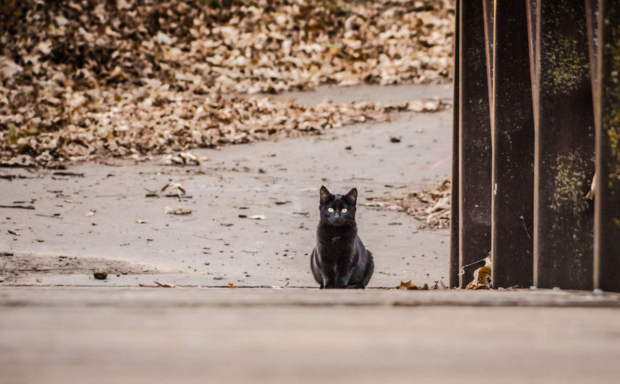 Black cat. Happy Halloween. Atmosphere Black Cat Cat Creepy Feral Cat Forboding Halloween One Animal Outdoors Sitting Superstition  Fall