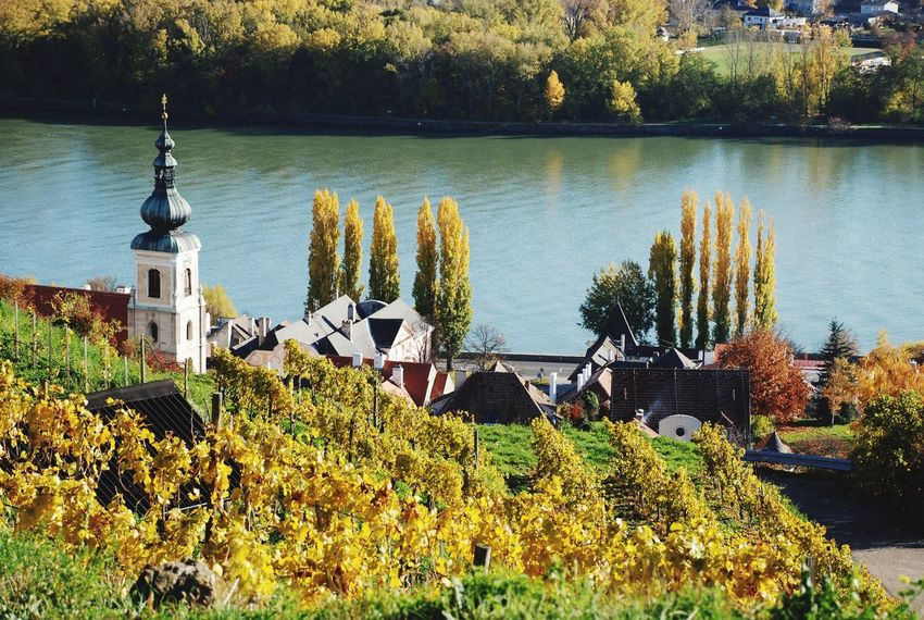Tree Nature Growth Danube River Danube Wachau Lower Austria Austria Spitz An Der Donau Autumn Autumn Colors Fall Fall Foliage Outdoors Day No People Water Plant Beauty In Nature Tranquility Sky