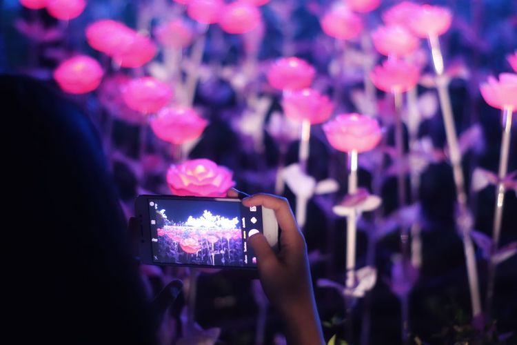 Close-up of woman photographing illuminated flowers at night