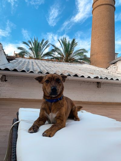 Dog sitting in a front of built structure against sky