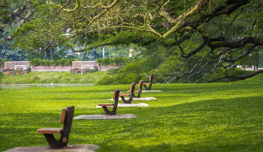Empty park benches in row