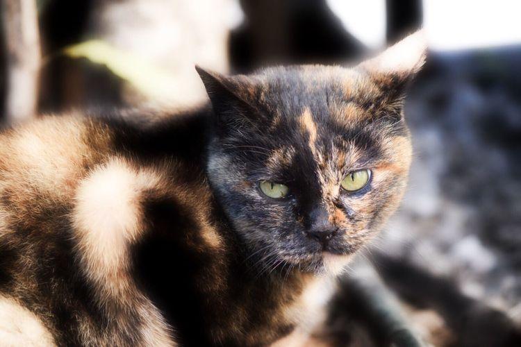 来客₍˄·͈༝·͈˄₎ฅ˒˒ Eye4photography  Showcase: February EyeEm Best Shots EyeEmBestPics From My Point Of View Cat Animals ふーって言われた