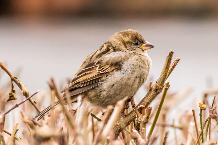 Close-up of bird perching on twig
