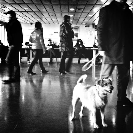 Dogs Blackandwhite Traveling