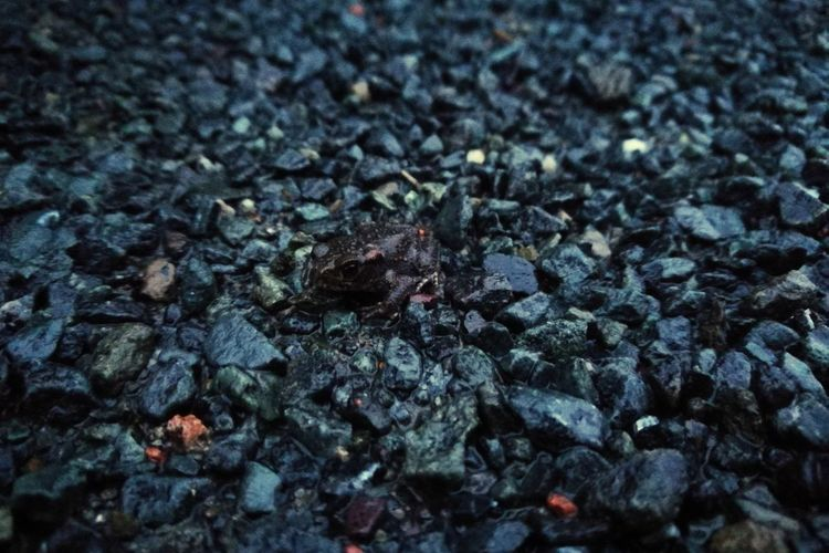 Backgrounds Full Frame No People Textured  Close-up Day Nature Outdoor Pursuit Fog Wet Frog Perspectives On Nature