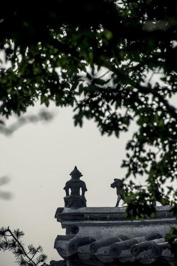 """""""天性圆融,物我一体,不惧不虑,无忧无喜。""""""""你就得瑟吧,掉下去摔不死你。"""" you think your zen stuff, i wonder what if you fall down. Buddha China Dule Temple Historical Building Low Angle View Old Buildings Rooftop Tree Welcome To Black"""