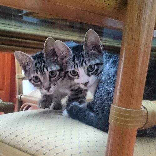 Echo und Rayado Echo_the_cat Rayado_the_cat