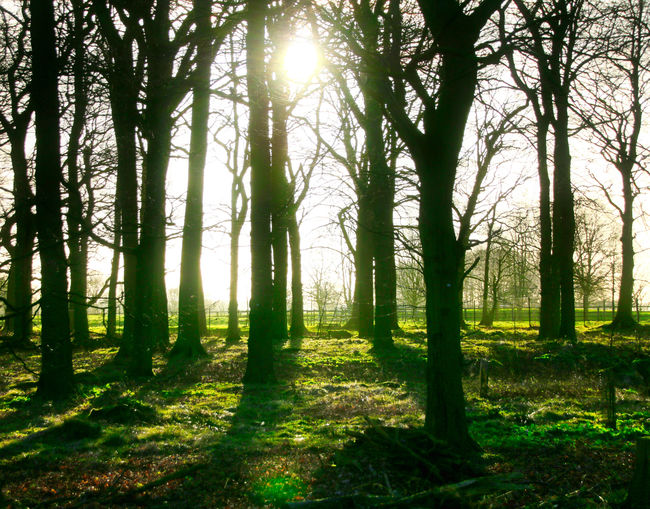 Light through the trees Beauty In Nature Bright Day Forest Growth Land Nature No People Non-urban Scene Outdoors Plant Scenics - Nature Sky Streaming Sun Sunbeam Sunlight Tranquil Scene Tranquility Tree Tree Trunk Trunk WoodLand