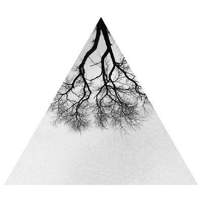 Triangle Tree Зеленоградск Instashape blackandwhite