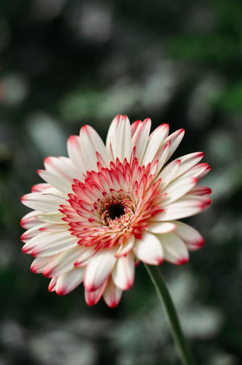 Close-up of flower blooming outdoors