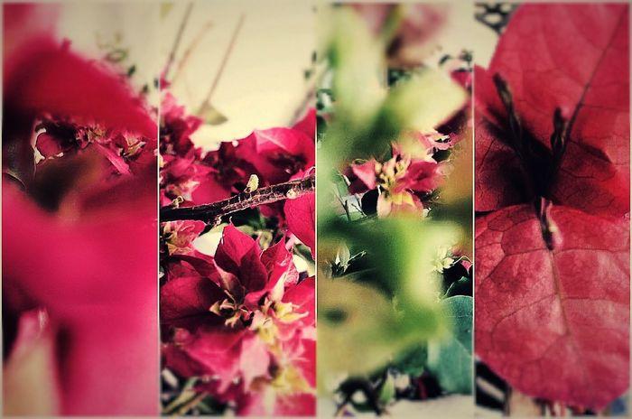 v(^_^v)♪ Life Flower