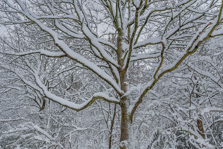 Bare tree in snow covered land