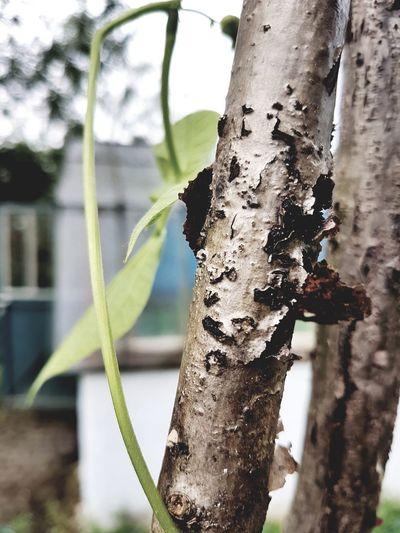 """#GartenBau """" Pflanze dein Glück anstatt es immer nur zu Ernten ,, EyeEmNewHere EyeEm Nature Lover Archtitecture Shotongalaxys7edge Tree Close-up Sky"""