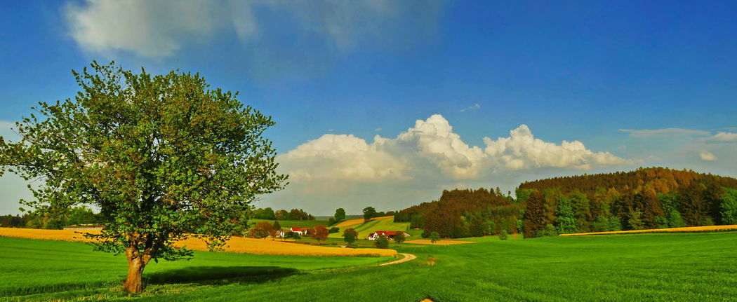Bavaria Bavarian Landscape Activity Beauty In Nature Cloud - Sky Day Environment Field Golf Grass Green - Golf Course Green Color Growth Land Landscape Nature No People Outdoors Plant Scenics - Nature Sky Sport Tranquil Scene Tranquility Tree