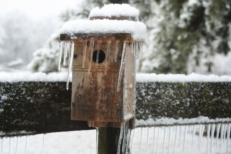 Close-up of wooden post covered with snow