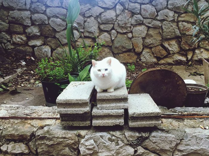 Portrait of white cat on wall
