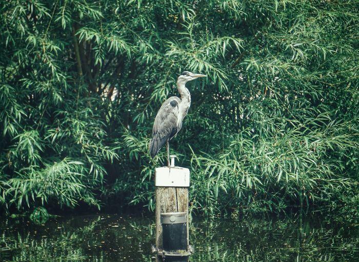 2019 Niklas Storm Juli Bird Perching Gray Heron Water Bird Of Prey Animal Themes Grass Green Color Plant Heron My Best Photo