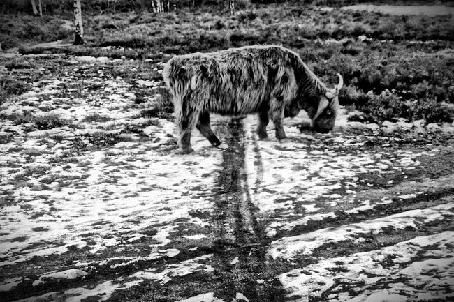 Free nature animals HDR Blackandwhite EyeEm Best Edits Photography Monochrome Animals The Great Outdoors - 2015 EyeEm Awards Eye4photography  Nature Blackandwhite Photography