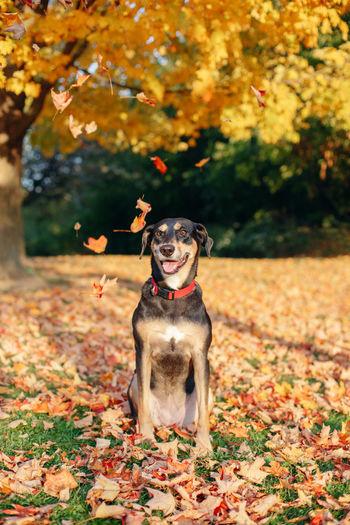 Dog sitting on land during autumn